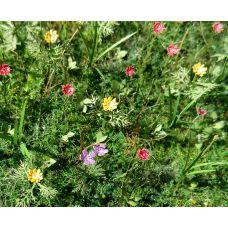 MSC VG3-028 - Lúčne kvety 1:35